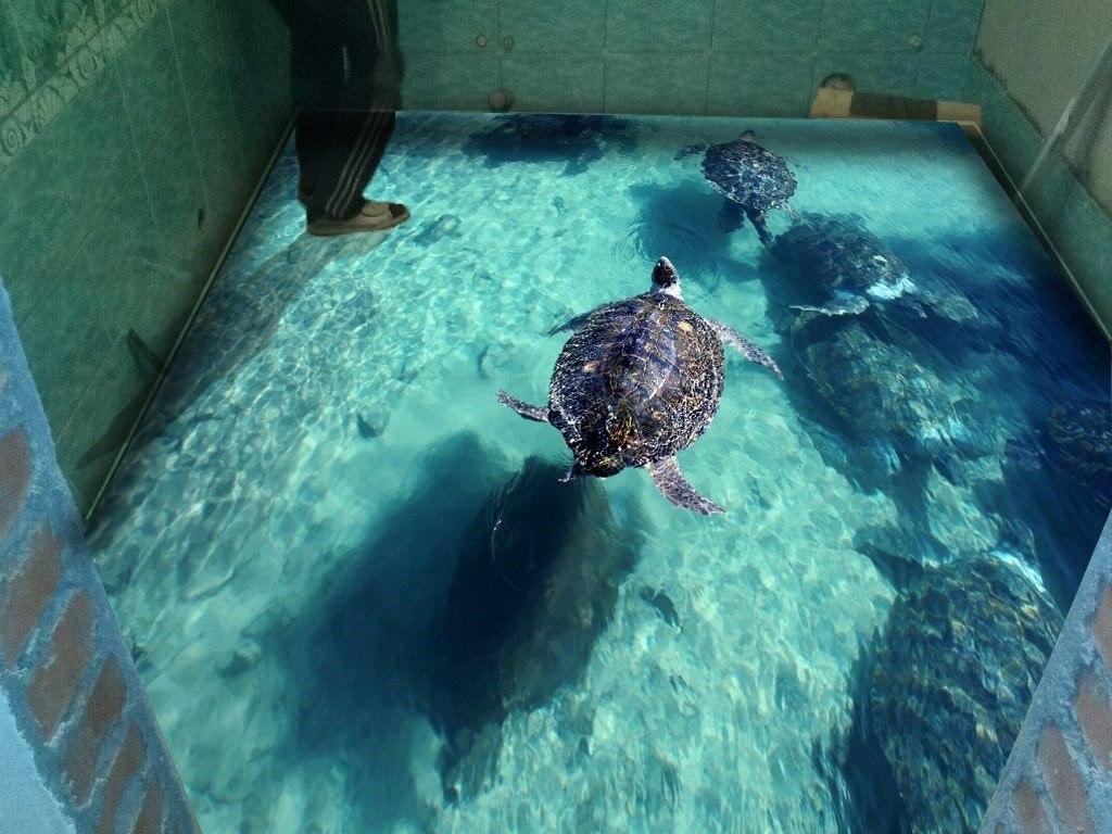 3D пол сан узел, черепаха