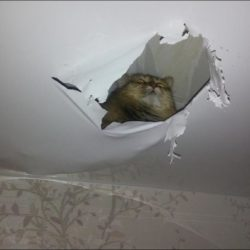 Повреждение потолка, ремонт потолка, ремонт натяжного потолка,